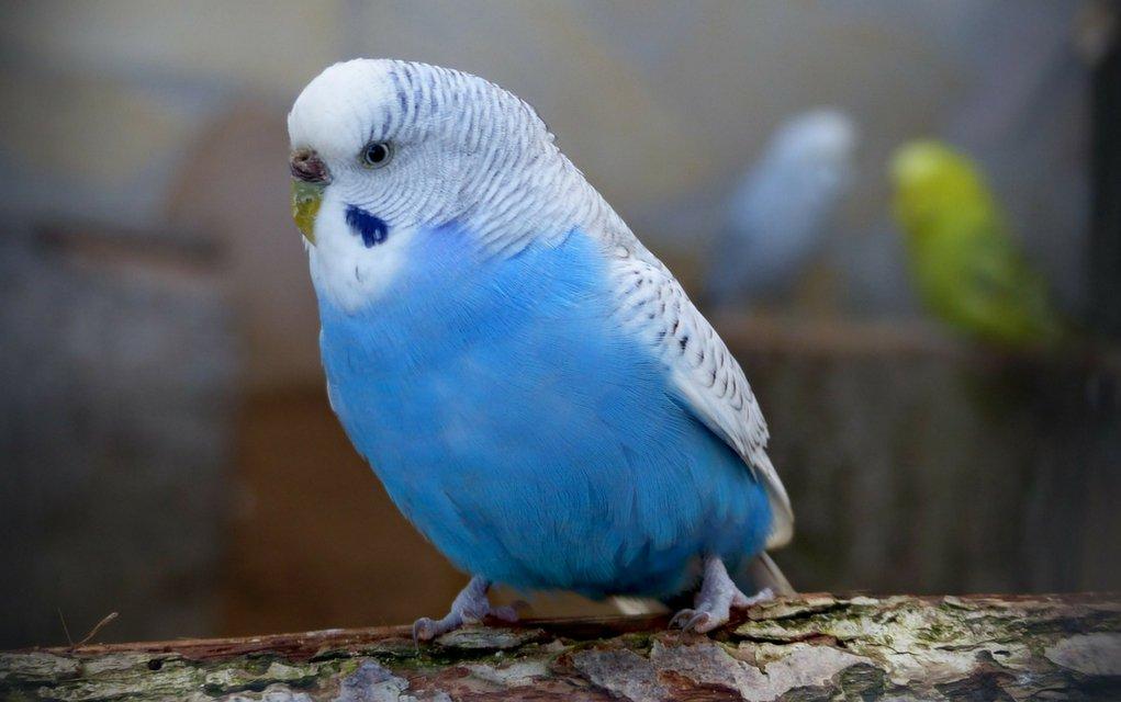 Hautkrankheiten bei Vögeln die mit Blutung einhergehen, erfordern schnelles Handeln.